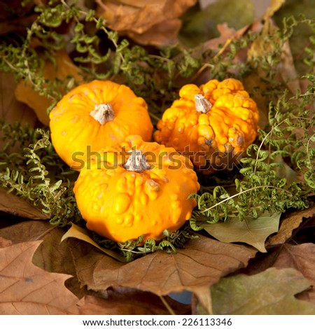 Autumn Pumpkins #226113346
