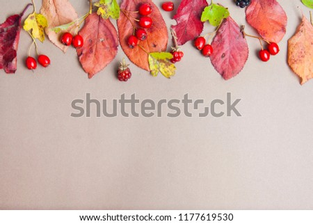 Autumn red and yellow leaves background with copy space. Fall concept. Top view. #1177619530