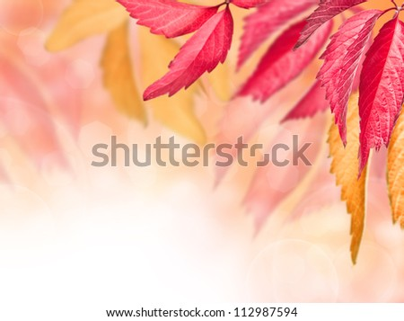 autumn red and yellow leaves on a blurred background