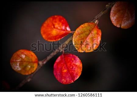 Autumn red Branch #1260586111