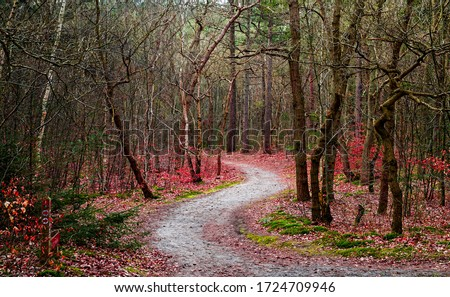 Autumn red forest trail landscape. Forest trail in autumn. Trail in autumn forest. Autumn forest trail view