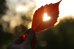 Autumn red leaf with cut heart in a hand