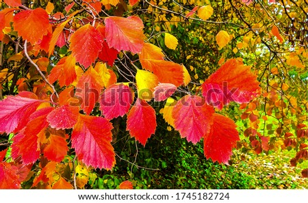 Autumn red leaves branch view. Red autumn leaves. Autumn red leaves