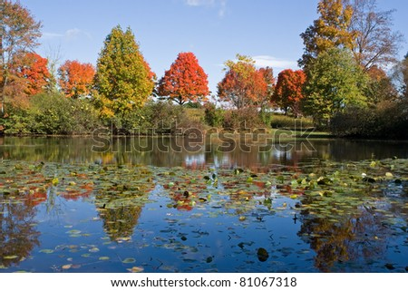 Autumn reflections at Middle Creek Wildlife Management Area in Lancaster County,Pennsylvania.