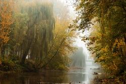 Autumn river in fog