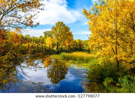 Autumn river trees