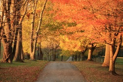 autumn road 4