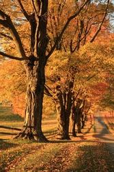 autumn road 2