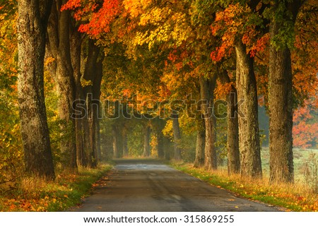Autumn Road Alley Northern Poland./ Autumn Road Alley.