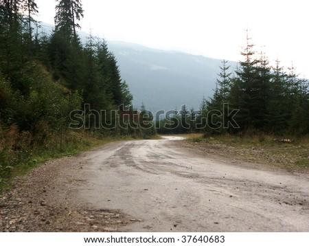autumn road forest fir tree rough mountain atv terrain meadow suv hill 4x4