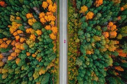 Autumn road in forest, concept of trip by red car aerial top view.