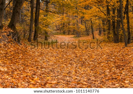 Autumn road in the woods covered with golden leaves