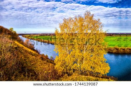 Autumn rural nature river birch tree landscape. Autumn river scene