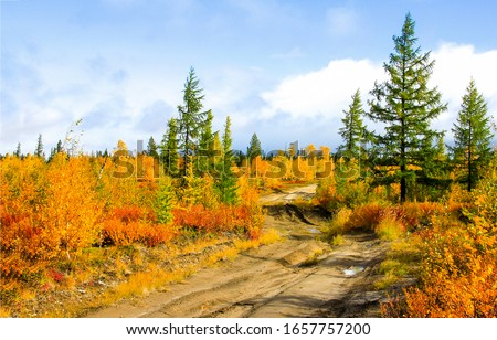 Autumn rural nature road landscape. Road in autumn rural. Autumn rural road