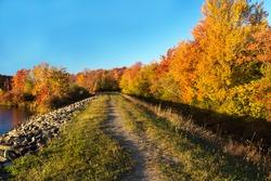 Autumn's Paintbrush at Tobyhanna State Park in Pennsylvania