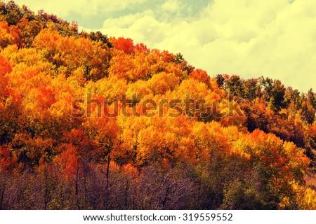 Autumn scene #319559552