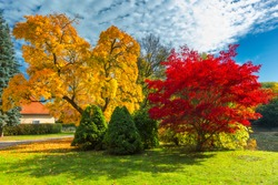 Autumn scene, fall,  red and yellow trees and leaves in sun light. Beautiful autumn landscape with yellow trees and sun. Colorful foliage in the park, falling leaves natural background