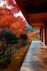 Autumn scene of fiery maple trees viewed from the Engawa (veranda or terrace-like floor) under the wooden eave of a traditional Japanese architecture in majestic Kozan-ji Buddhist Temple, Kyoto, Japan