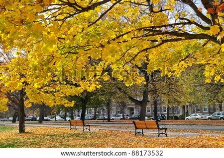 autumn scene of park near Fenway street, Boston, US. Empty bench and ground covered with fallen maple leaves.
