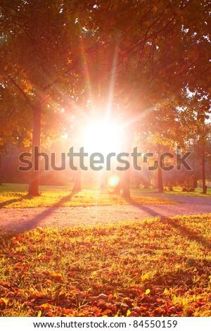 Autumn Scene Sunshine