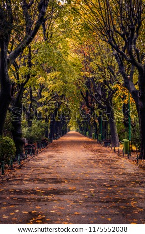 Autumn scene with alley in a Cismigiu park in Bucharest on a rainy day with leaves on the ground in vertical perspective