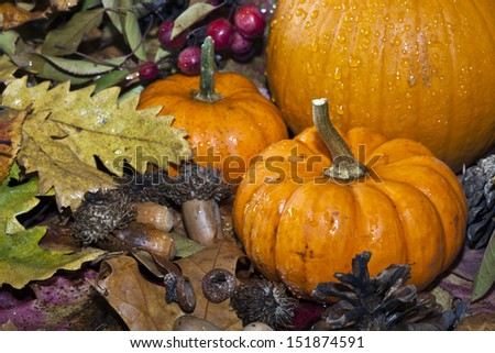 Autumn scene with leaves acrorns and pumpkin