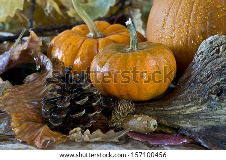 Autumn scene with pumpkins leaves and acorns