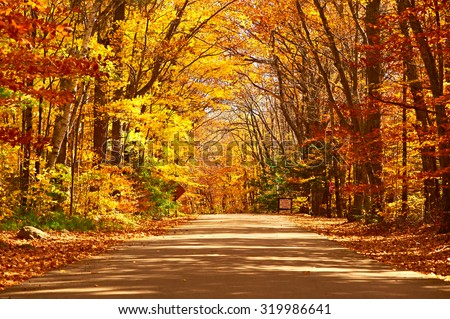 Autumn scene with road in forest #319986641