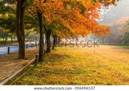 Shutterstock Autumn scenery