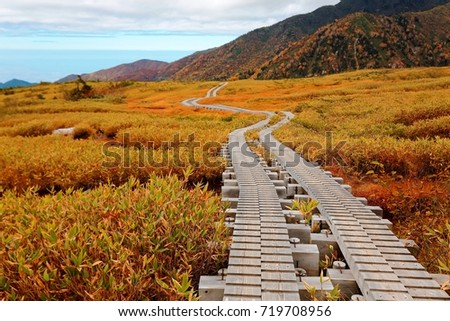 Autumn scenery of a wooden boardwalk winding through the grassy wetland of Midagahara Highland in Tateyama Kurobe Alpine Route in Toyama, Japan, with golden grass and colorful mountains in background