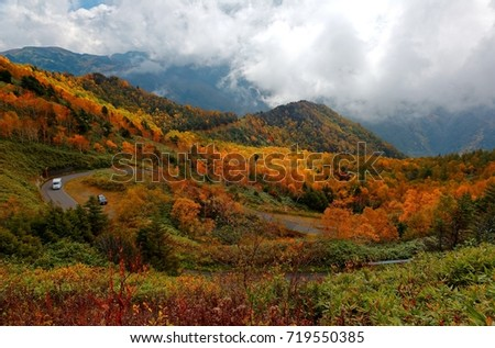 Autumn scenery of cars driving on a sharp turn of a highway winding thru colorful forests by the mountainside & foggy mountains in background in Shiga Kogen Highland, a national park in Nagano, Japan #719550385