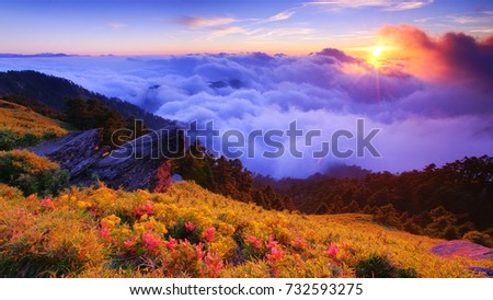Autumn scenery of Hehuan Mountain.With bamboo field along the Trails,Sunshine on Giant Knotweed,Chrysanthemum blossoms,Cliff(Qixiandeng) and sea of cloud is Taiwan aesthetic sense.