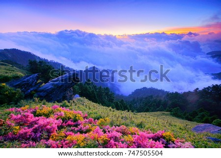 Autumn scenery of Hehuan Mountain.With bamboo field along the Trails,twilight shine on Giant Knotweed,Chrysanthemum blossoms,Cliff(Qixiandeng) and sea of clouds is Taiwan aesthetic sense.Asia.
