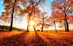 Autumn scenery with gold sunlight in a park, with blue sky, the sun, trees casting shadows as leading lines and lots of red foliage