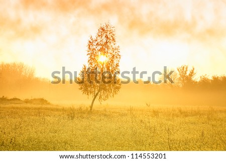 Autumn scenery with morning mist at the dawn