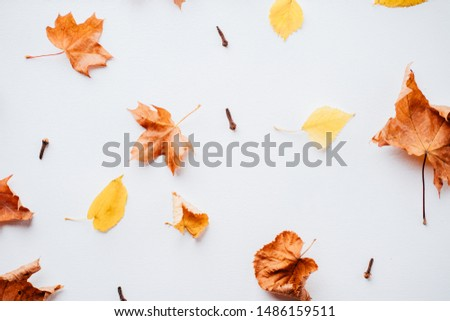Autumn season abstract background. Fall yellow leaves pattern on white surface. Thanksgiving day, seasonal concept. Copy space.