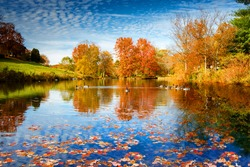 autumn season starting in the lake side at wonderful sunny day, duck swimming along the lake