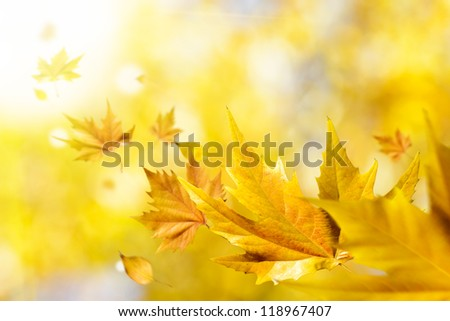 Autumn seasonal background. Abstract fall season concept with golden leaves flying on air. Wind blowing on nature.