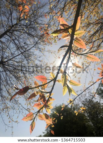 Autumn Seasonal Leaves  #1364715503