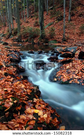 Autumn spruit in Bohemia - stock photo