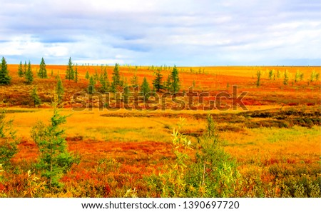 Autumn steppe tundra nature landscape. Autumn tundra landscape. Autumn steppe landscape. Autumn nature field panorama