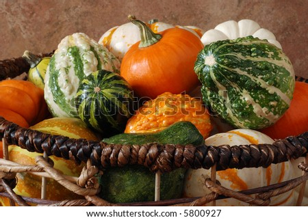 Autumn still-life of miniature pumpkins and colorful gourds in an open weave basket
