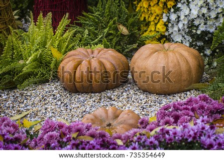 Autumn still life with chrysanthemums flowers, yellow leaves and orange ripe pumpkin. #735354649