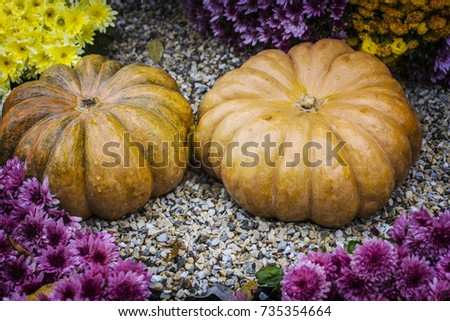 Autumn still life with chrysanthemums flowers, yellow leaves and orange ripe pumpkin. #735354664