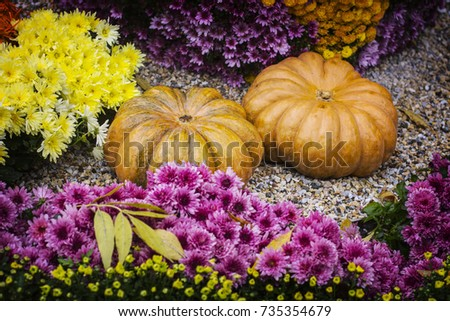 Autumn still life with chrysanthemums flowers, yellow leaves and orange ripe pumpkin. #735354679