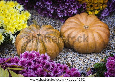 Autumn still life with chrysanthemums flowers, yellow leaves and orange ripe pumpkin. #735354682