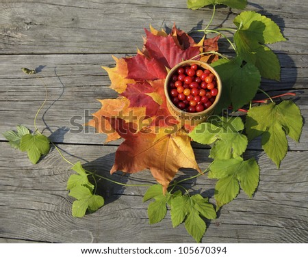 Autumn still life with colorful  leaves and berries
