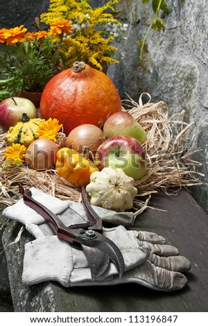 autumn still life with halloween pumpkins in the garden