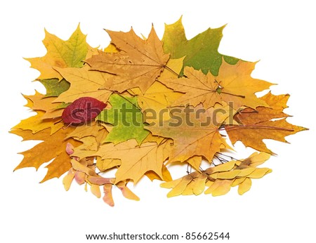 Autumn still life with leaves on white background