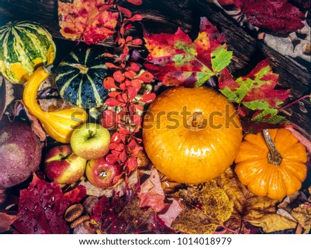 Autumn still life with pumpkin and colored leaves  #1014018979